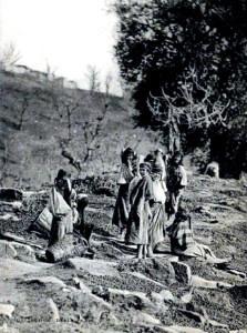 Sechage-Olives