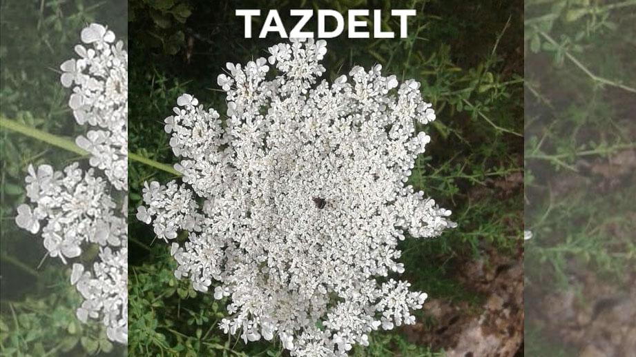TAZDELT